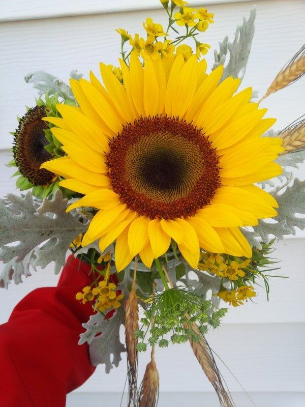 Sunflower bouquet with dusty miller, wheat, queen annes lace
