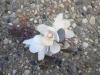 fresh corsage with cymbidium orchids, seeded eucalyptus