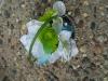 wristlet: hydrangea, bears grass, green buttons, bling pieces