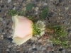boutonniere with rose, seeded eucalyptus